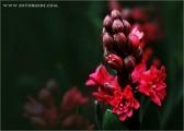 c20_632265_blume_fb.jpg