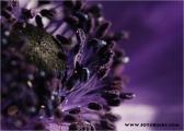 c20_633104_annemone_fb.jpg