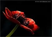 c20_633199_annemone_fb.jpg