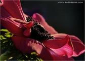 c20_633204_anneomne_fb.jpg