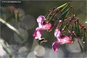 c21_614950_springkraut_fb.jpg