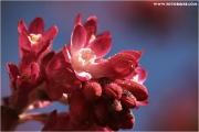 c21_720355_johannis_fb.jpg