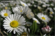 c21_722404_blume_fb.jpg