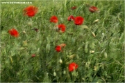 c21_723192_windmohn_fb.jpg