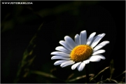 c21_723334_blume_fb.jpg