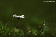 c21_724699_blume_fb.jpg