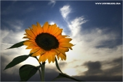 c21_729622_blume_fb.jpg