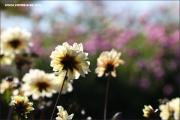 d100_150157_mainau_fb