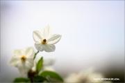 d100_156926_jasmin_fb