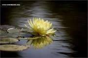 d100_158695_seerose_fb