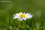 m3_089978_blume_fb.jpg