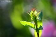 m3_101910_pflanze_fb.jpg