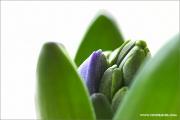 m3_104026_hya_fb.jpg