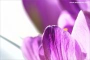 m3_104713_krokuss_fb.jpg