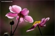 m3_105800_rosa_fb.jpg