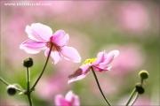 m3_105803_rosa_fb.jpg