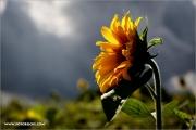 m3_106265_soblume_fb.jpg