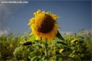 m3_106271_blume_fb.jpg