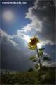 m3_106295_blume_fb.jpg
