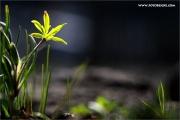 m3_107100_blume_fb.jpg