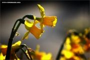 m3_107118_blume_fb.jpg