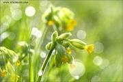 m3_107410_blume_fb.jpg