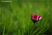 m3_107779_ma_fb.jpg