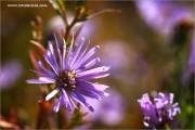 m3_108350_blume_fb.jpg