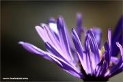 m3_108352_blume_fb.jpg