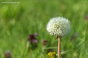 m3_108515_blume_fb.jpg