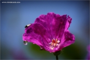 m3_109976_blume_fb.jpg