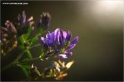 m3_111731_klee_fb.jpg