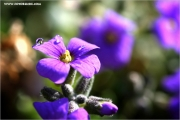 m3_114520_blaukissen_fb.jpg