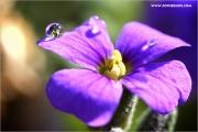 m3_114520_blaukissen_fb1.jpg