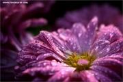 m3_115314_blume_fb.jpg