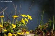 m3_115322_blume_fb.jpg