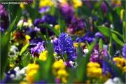 m3_115324_blumen_fb.jpg