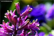 m3_115344_blumen_fb.jpg