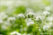 m3_116162_blume_fb.jpg
