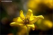 m3_118836_blume_fb.jpg