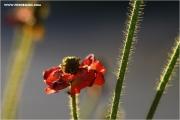 m3_119458_mohn_fb.jpg