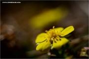 m3_120035_blume_fb.jpg