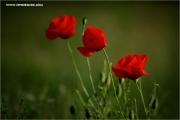 m3_121019_mohn_fb.jpg