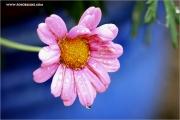 m3_121369_blume_fb.jpg