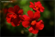 m3_123141_blume_fb.jpg