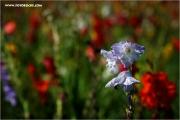 m3_125472_blumen_fb.jpg