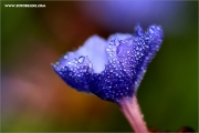 m3_127909_blume_fb.jpg