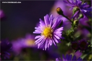 m3_127954_blume_fb.jpg