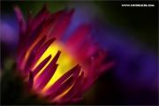 m3_128285_blume_fb.jpg