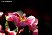m3_128715_primel_fb.jpg